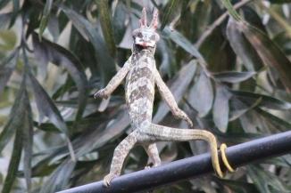 Alien monster (kinyonga multituberculata)
