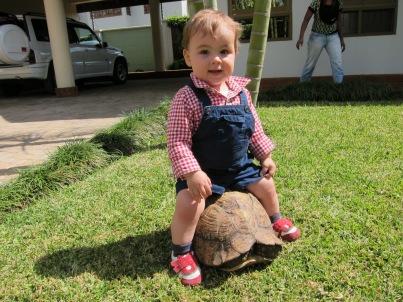 Simón montando en tortuga