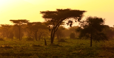 Sunset-Ndutu