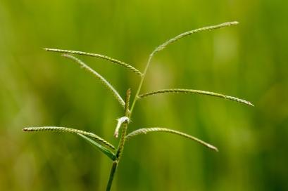 Grass-Ruaha