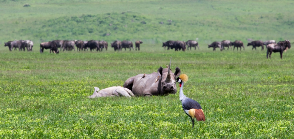Black Rhino-Ngorongoro