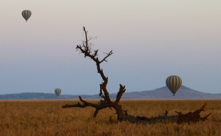 Balloons at dawn in Serengeti