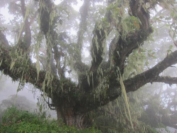 Mount Meru's forest-Arusha, Tanzania