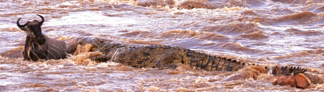Mara River crossing-Serengeti