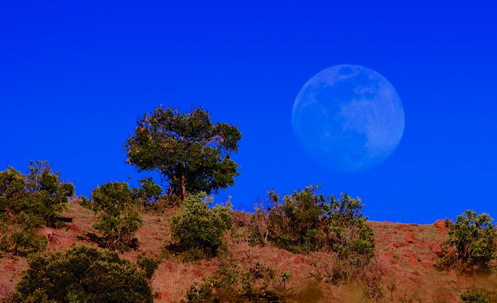 Moonrise near Lobo-Serengeti