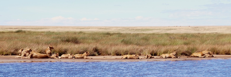 Morning nap-Serengeti