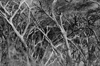Forest-Lake Manyara