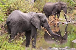 Elephants-Lake Manyara