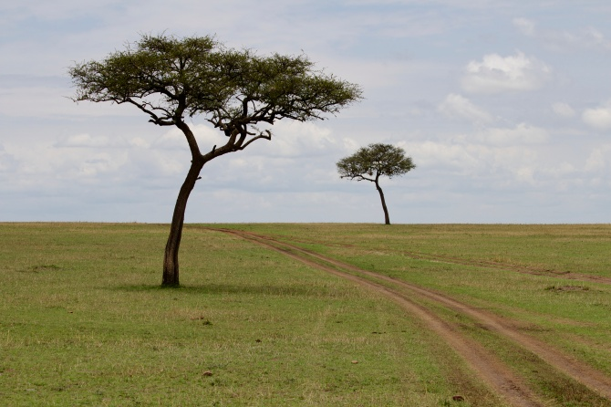 Road to Mara River-Serengeti